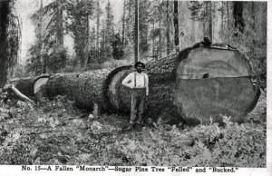 Mccloud History - logger